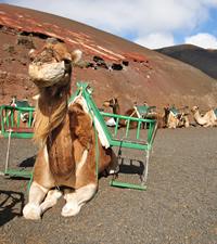 Qu� visitar en Lanzarote