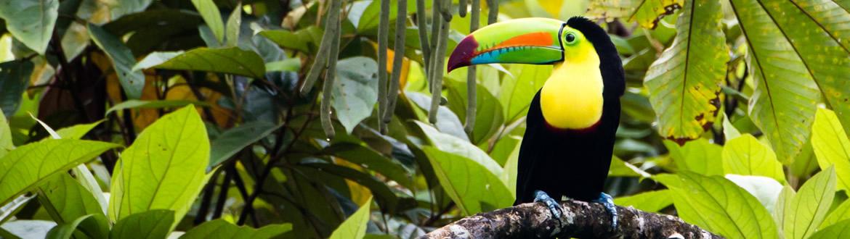 Costa Rica: Naturaleza Al Completo