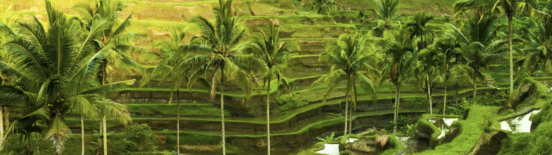 Indonesia: Ubud Esencial y Playas