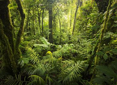 Costa Rica: Naturaleza Al Completo y Playas