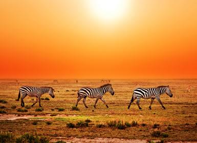 Safari Tanzania Explorer