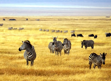 Kenia: Safari Tanganika