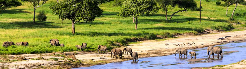 Circuito Zanzibar : Tanzania safari en y zanzíbar circuito con