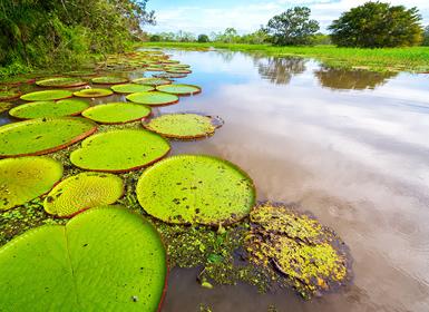 Perú: Perú y Amazonas