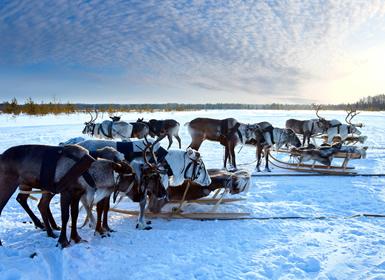 Finlandia: ESPECIAL PUENTE DE DICIEMBRE Laponia MUONIO