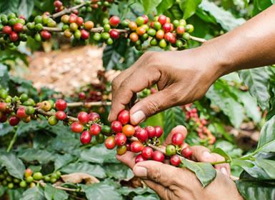 Colombia: Ciudades y Cafetales Al Completo