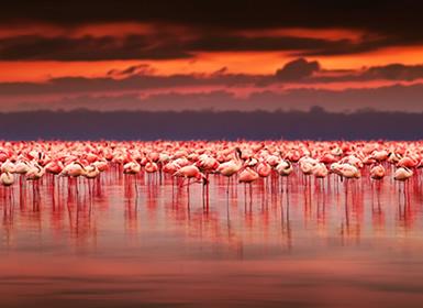 Kenia e Islas del Índico: Safari en Kenia y Mauricio