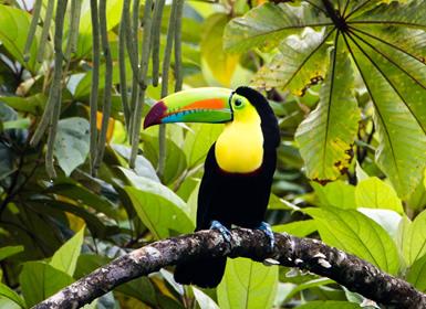 Costa Rica: Tortuguero, Arenal, Monteverde y Guanacaste