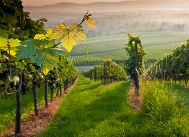 Combinado: La Rioja y Burgos