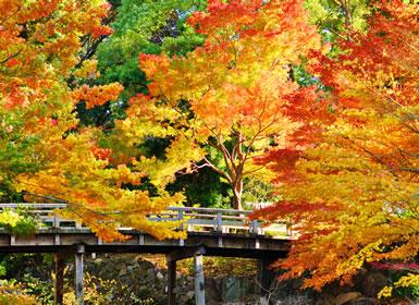 Japón: Del Sur al Norte de Japón