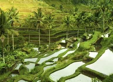 <b>Indonesia: Ubud y playas de Bali</b>: Indonesia: Ubud y playas...