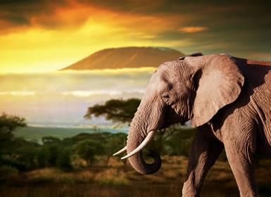 Kenia: Safari en Kenia con Parque Amboseli