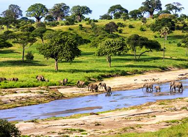 Tanzania: Safari en Tanzania y Zanzíbar