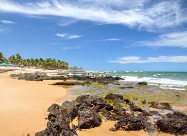 Brasil: Colores de Brasil con extensión a Praia do Forte