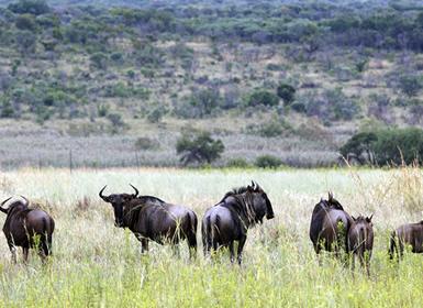 Sudáfrica: Sudáfrica con Reserva de Entabeni