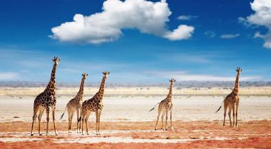 Namibia al completo