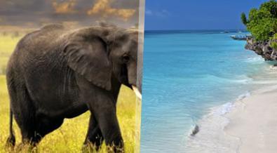 Gran Safari en Tanzania y Playas de Zanzíbar