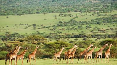 Kenia Fantástica