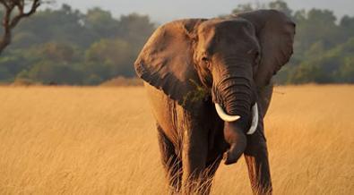 Kenia: Safari Kiboko
