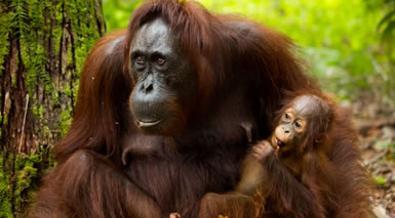 Malasia: Lo Mejor de Borneo