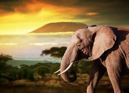 Escapada a Kenia