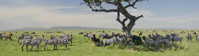 Kenia y Tanzania: Safari en Kenia y Tanzania, circuito clásico