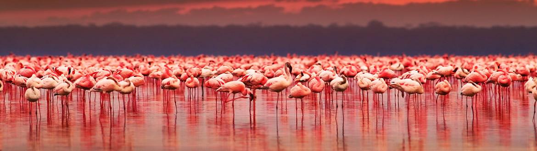 Kenia e Islas del Índico: Safari en Kenia y Mauricio, circuito con estancia en playa