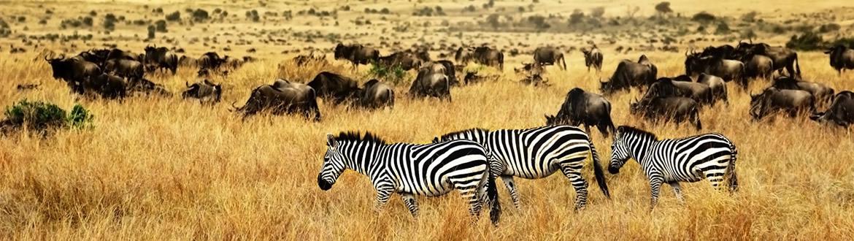 Kenia: Safari en Kenia y Zanzíbar, circuito con estancia en playa