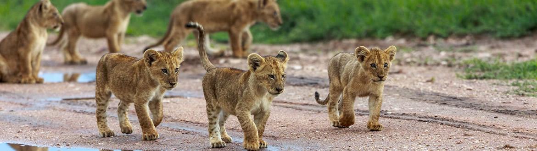 Kenia e Islas del Índico: Safari en Kenia y Maldivas, circuito con estancia en playa