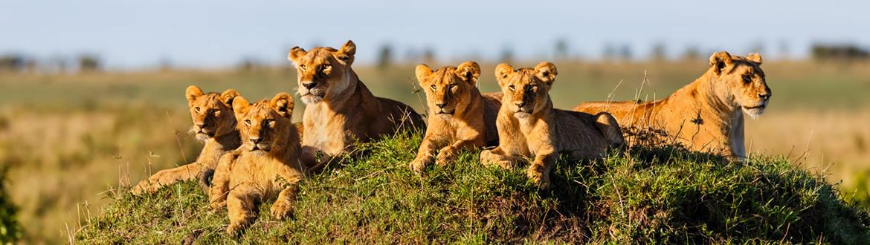 Kenia: Safari en Kenia con Masai Mara, circuito clásico
