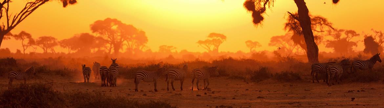 Kenia: Safari en Kenia con Masai Mara y Nairobi, circuito clásico
