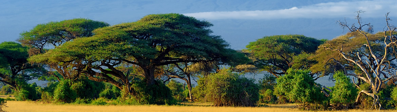 Circuito Zanzibar : Kenia e islas del Índico: masai mara naivasha y amboseli sopa