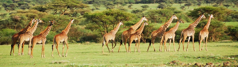 Kenia: Safari en Kenia con Parque Aberdare y Nairobi, circuito clásico