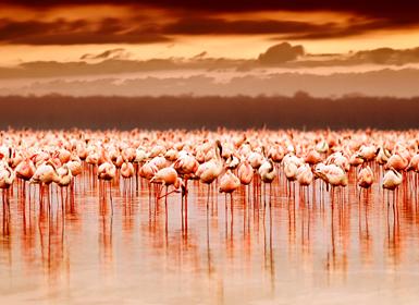 Parque Nacional del Lago Nakuru