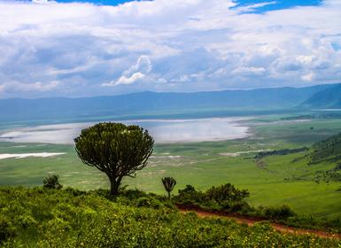 Zona de conservación de Ngorongoro (ZCN)