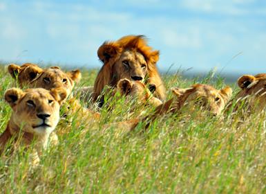 Parque Nacional del Serengueti