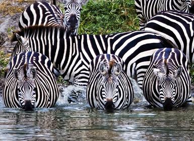 Parque Nacional de Tarangire