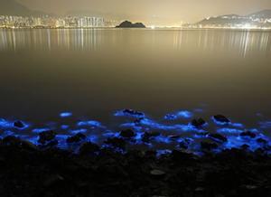 Bahías Bioluminiscentes