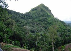 Bosque Estatal de Maricao