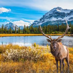 Viajes Organizados Costa Oeste Canada Desde 2 272 El