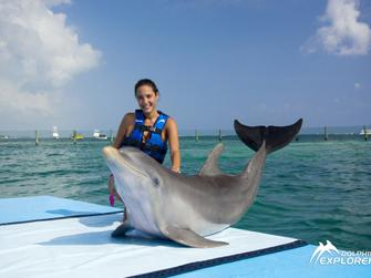 Dolphin Explorer (Nadar con delfines) + transporte desde Bayahibe