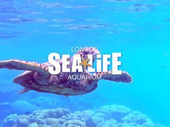 Sealife London Aquarium (Entrada)