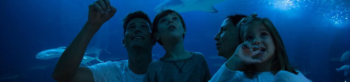 Entradas a oceanogr fic Entradas aquarium valencia